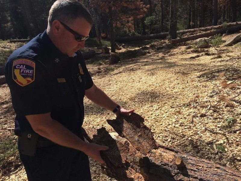 Cal Fire Division chief Jim McDougald shows bark beetle trail on a piece of bark. (Marc Benjamin, Fresno Bee)