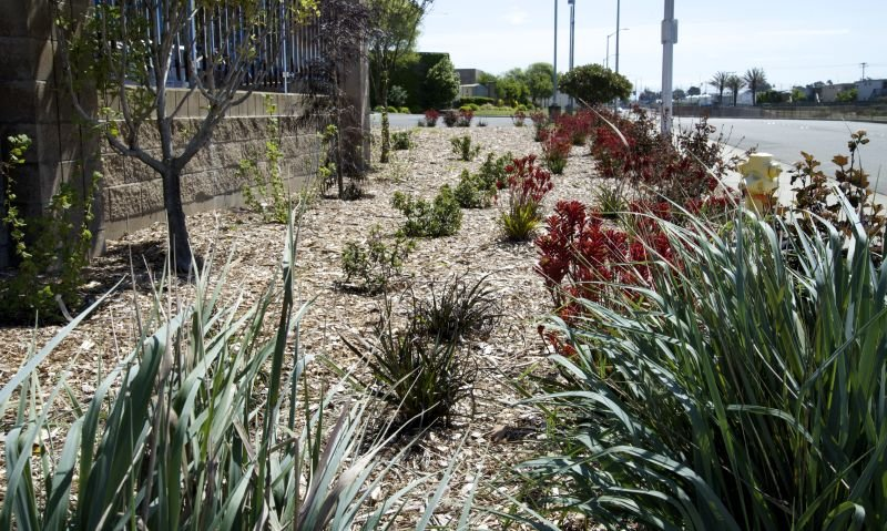 Drought-tolerant landscaping has replaced grass to conserve water in South San Francisco, California. (Tara Lohan)