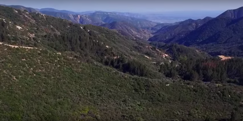 A second still from the movie This Land Is Our Land shows the San Bernardino National Forest where Nestle is extracting water for bottling. (Story of Stuff Project)