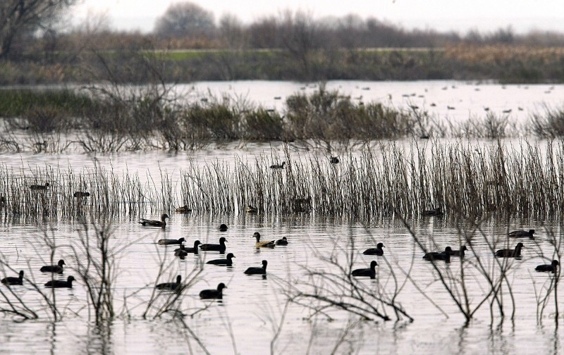 Waterfowl at the Kern National Wildlife Refuge in Delano, California. (Damian Dovarganes, Associated Press)