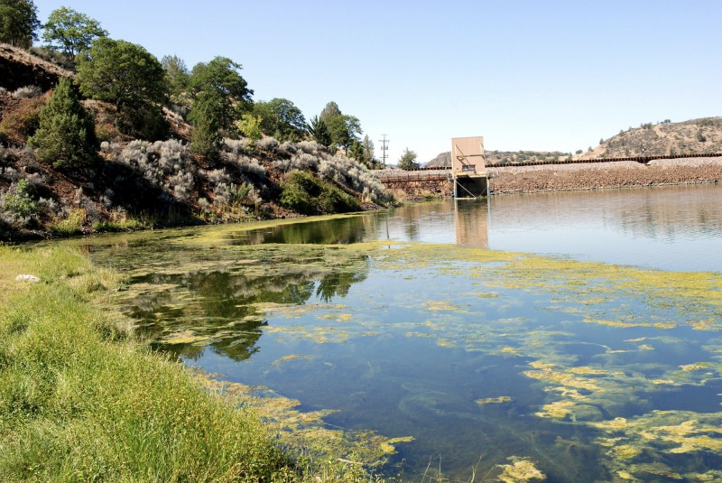 An algae bloom in the reservoir behind Iron Gate Dam on the Klamath River near Hornbrook, Calif. (Jeff Barnard, AP)