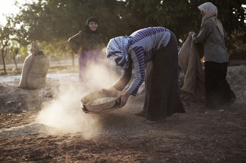 Syrian women work on their field in the village of Tarafat, Syria, in October 2012. (AP Photo/ Manu Brabo)