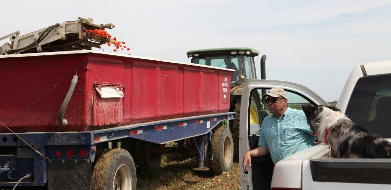 Farmer Dan Errotabere had to fallow hundreds of acres of land in 2013 due to regulations that protect fish in the Sacramento-San Joaquin Delta. Some farmers in the San Joaquin Valley will face another year of limited surface supplies. (Gosia Wozniacka, AP)