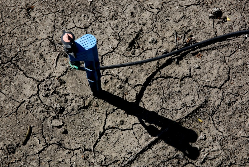 A low-flow water emitter sits on some of the dry, cracked ground of farmer Rudy Mussi's almond orchard in the Sacramento-San Joaquin Delta near Stockton, Calif. Scientists say soil health is a key part of conserving water. (Rich Pedroncelli, AP)