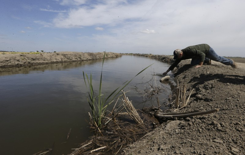 Gino Celli, who farms 1,500 acres (600 hectares) of land and manages another 7,000 acres (2,800 hectares), draws his irrigation water from the Sacramento-San Joaquin River Delta. How much water to export from the Delta remains a divisive issue in California. (Rich Pedroncelli, AP)
