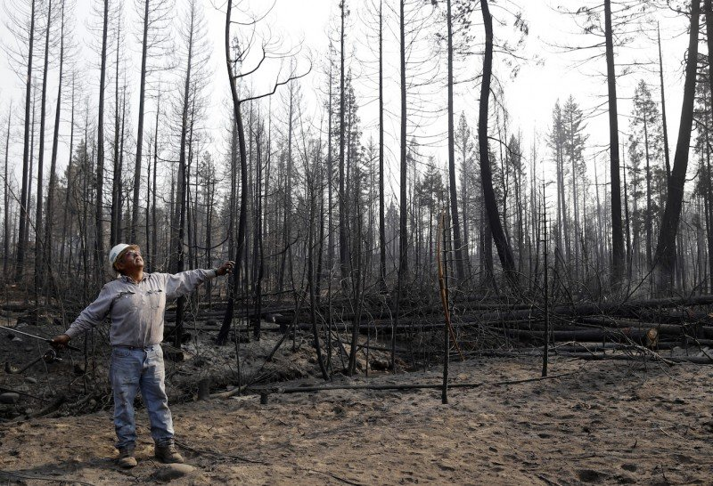 Juan Flores stands in the middle of a charred forest as he chops down trees in Manton, Calif. in 2012, that were burned by the Ponderosa Fire. Many of California's forests are overgrown with trees, which has increased fire risk and water consumption. (Jose Sanchez, AP)