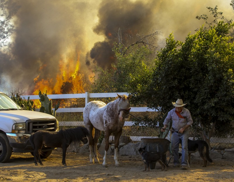 Jimmy Romo, 73, leads a horse and other animals from his ranch as a wildfire burns behind them in Azusa, Calif., on Monday, June 20, 2016. Police in the city of Azusa and parts of Duarte ordered hundreds of homes evacuated. (Ringo H.W. Chiu, AP)