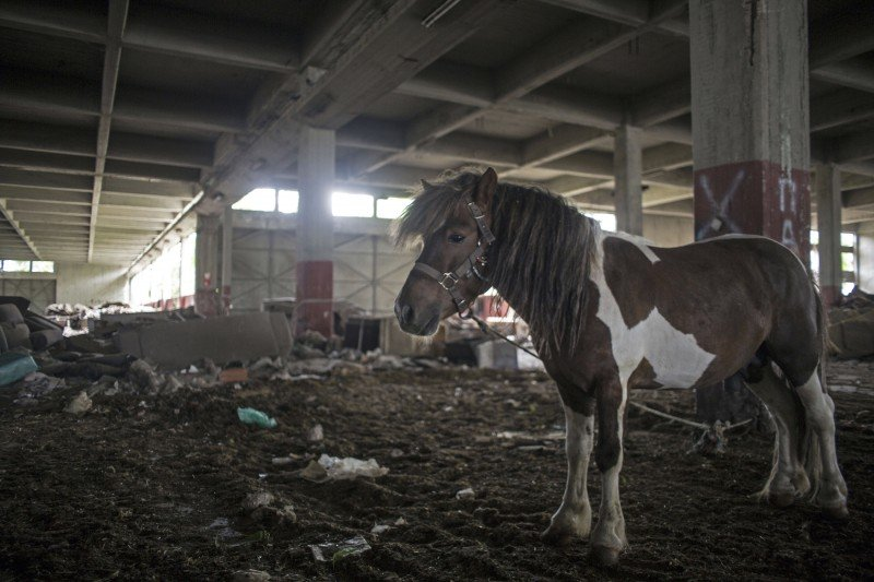 A pony stands in the middle of a warehouse in the neglected district of Eleonas, a few yards away from the camp for refugees and migrants. (Iason Athanasiadis)