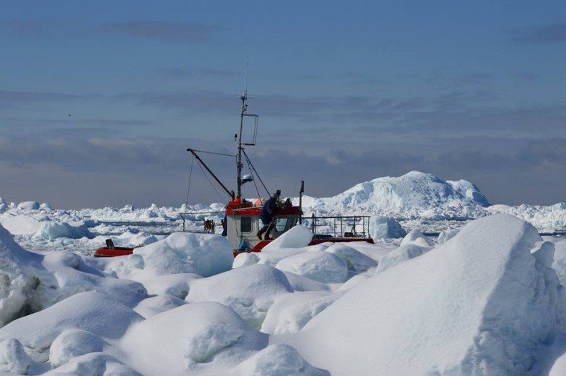 A fishing boat makes its way through heavy ice in Greenland. (WWF/Mette Frost)