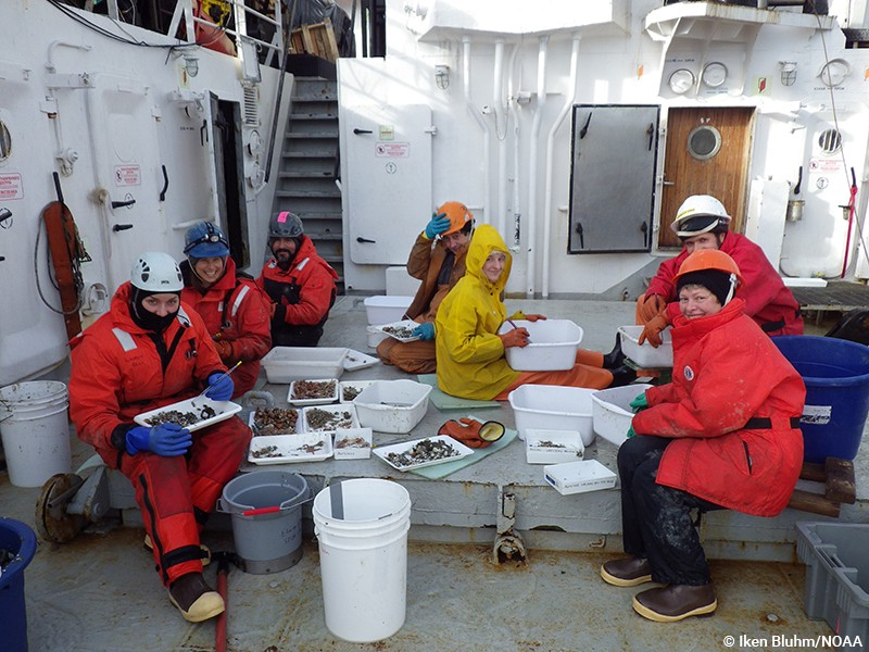 Sorting the rich benthos in the Chukchi Sea, a group effort. (NOAA/Iken Bluhm)