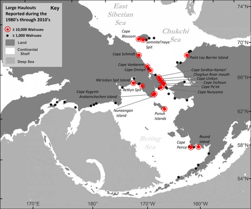 Map showing Pacific walrus coastal haulout locations reported in the past four decades (1980s to 2010s) with a maximum aggregation size of greater than or equal to 1,000 walruses. (USGS)
