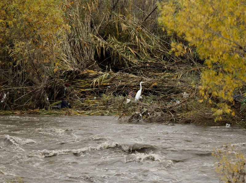 On Jan. 5, 2016, a white egret finds refuge on the vegetation growing inside the Los Angeles River after torrential rains. A new program in Santa Cruz County plans to offer incentives to landowners to help infiltrate stormwater to recharge depleted groundwater aquifers. (Damian Dovarganes, AP)