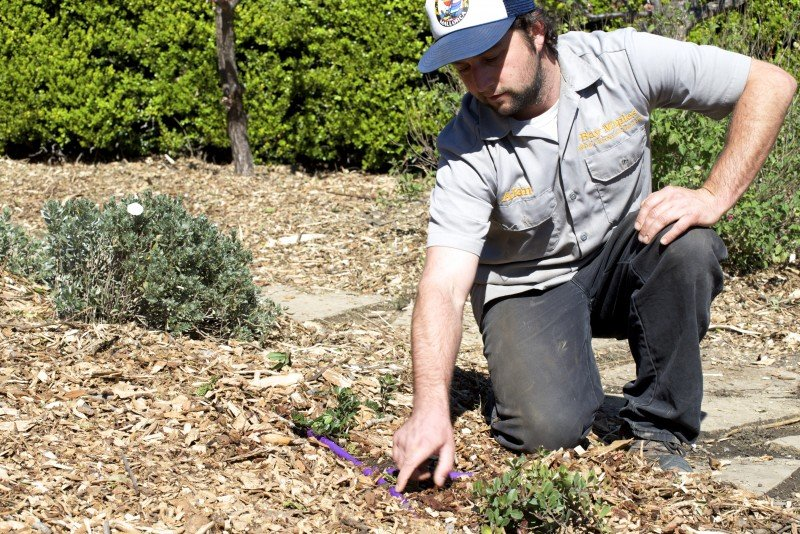 Alan Hackler, owner of Bay Maples landscaping company in San Jose, Calif., installs a recycled water irrigation system and drought-tolerant plants at a home in Saratoga, Calif. (Tara Lohan)
