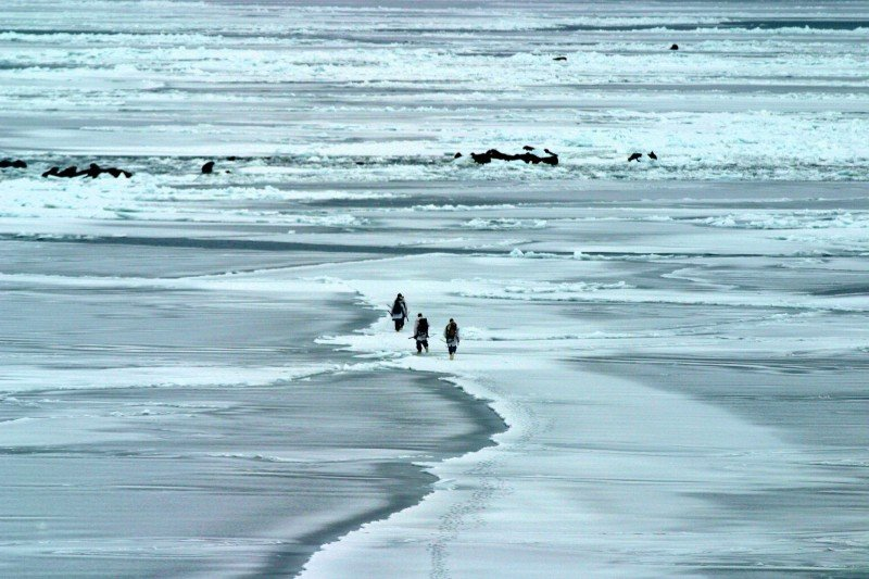 The U.S. Geological Survey walrus research team walks towards walrus across the northern Bering Sea ice in this 2006 photo. (USGS)