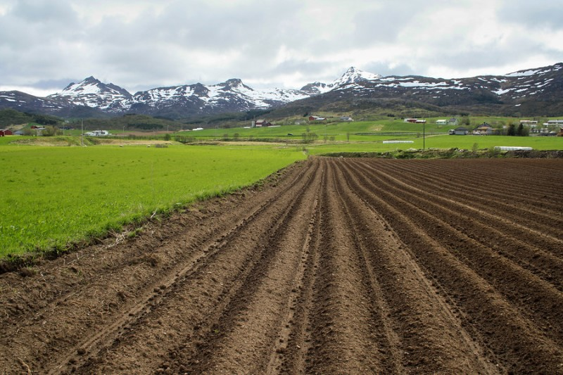 New mapping of soils in Vestvågøy, Lofoten, shows that many areas have very good soil quality, suitable for potato production. (NIBIO)