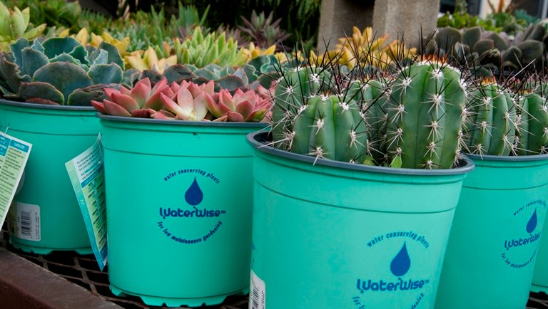 "A Lowes in San Bruno, California, sells ""waterwise"" plants to help residents use less water in their gardens. Mandates and incentives to conserve have helped keep water use steady or declining even as population has increased. (Tara Lohan)"
