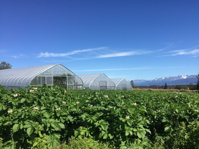 Oceanside Farm grows fruits and vegetables in a combination of high tunnels and outdoor gardens. (Emily Schwing)