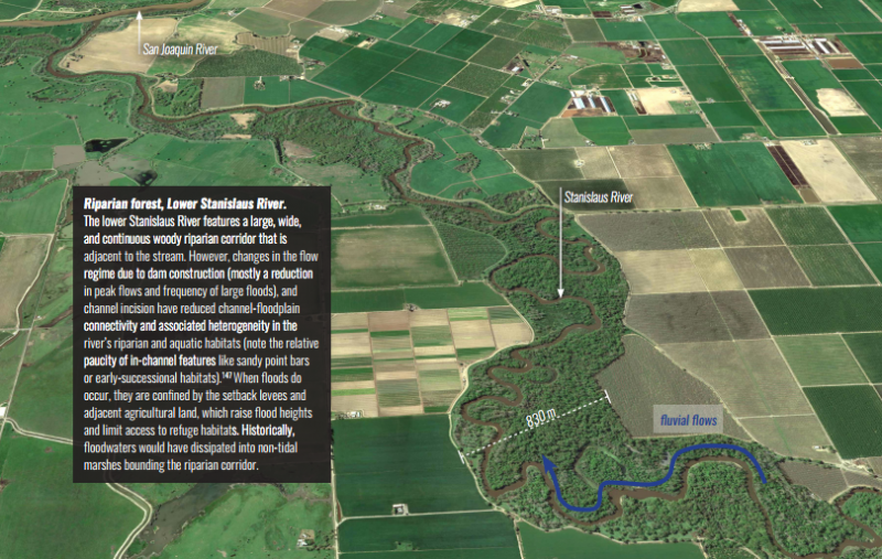 An example of a riparian area in the Delta from A Delta Renewed report. (Google)