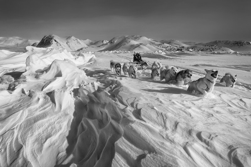Dog sled on the sea ice in Scoresbysund, Northeast Greenland. The traditional dog sled culture is threatened by the use of snowmobiles. (Carsten Egevang)