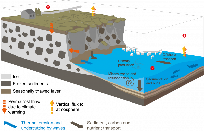 This graphic shows Arctic coastal erosion and its biological, geological and chemical impacts on the shallow water zone. (Image Courtesy Alfred Wegener Institute)