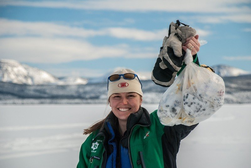 Jean Polfus holds up a bag of caribou scat collected by environmental monitoring students on Tets'ehxe (Drum Lake) in the Shúhtagot'ı̨nę Nę́nę́ (Mackenzie Mountains) of the Northwest Territories, Canada. Genetic analysis of the mucosal layer covering the fecal pellets has helped define spatial genetic patterns and characterize the boundaries of different groups of caribou in the Sahtú region. (Photo Courtesy of Jean Polfus)
