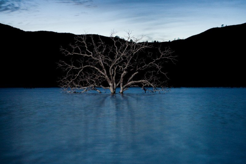 A tree rises from the bottom of Indian Valley Reservoir in rural Lake County, Calif., in November 2009. Indian Valley is one of many reservoirs too low and stagnant to support recreation, one of many benefits listed as justification for their construction. (Nathan Weyland)